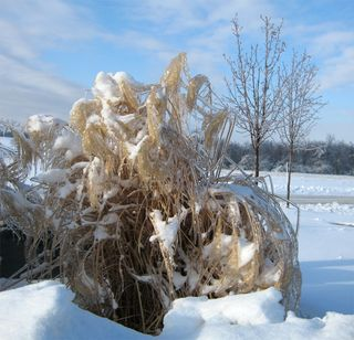 Frozen-grass-trees_Jan-2009