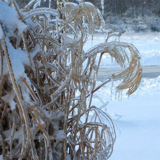 Frozen-grass-2_Jan-2009