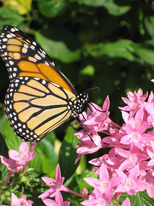Monarch 3