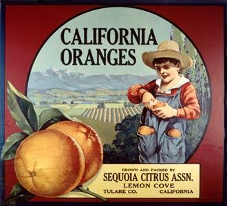 Calif_oranges21