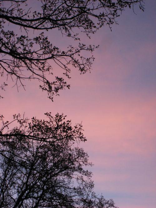 LWW Backyard Sunrise 3